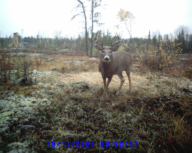 Harris Hill Resort Deer Site. Baited sites with heated tower stands for optimum hunting or wildlife viewing with photography opportunities: Whitetail Deer & trophy Bucks in Northwestern Ontario Canada