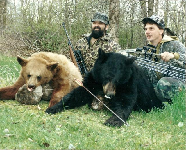 Black Bear in Colour Phases - Blonde & Black harvested with Archery Equipment: Blonde, Cinnamon or Brown or Black - all colour phases of Black Bear.